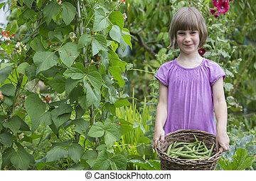 groente, pluk, meisje, bonen, tuin