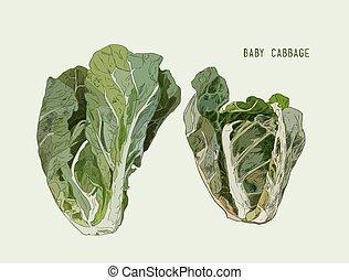 groentes, vrijstaand, hand, cabbage., vector, baby, getrokken
