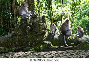 groep, aapjes
