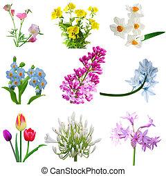 groep, bloemen