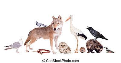 groep, dieren, europees-aziatisch