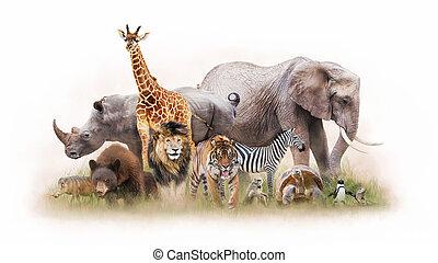 groep dieren, samen, vrijstaand