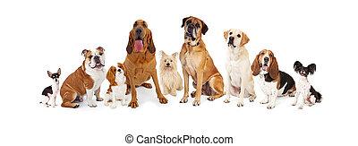 groep, gevarieerd, honden, grootte