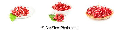 groep, roos, op, guelder, achtergrond, witte , besjes, rood