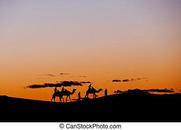 groep, toeristen, kameel, dunes., erg, door, gedurende, trekking, kleine, chebbi, ondergaande zon