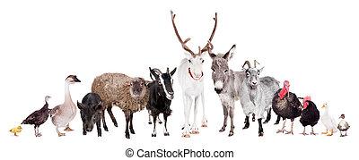 groep, van, boerderijdieren, op wit