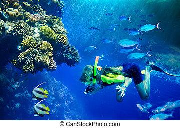groep, van, coraal, visje, in, blauwe , water.