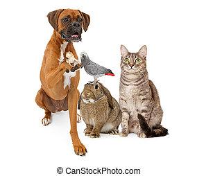 groep, van, dometic, huisdieren, zitten samen