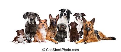 groep, van, negen, honden