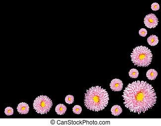 groep, van, rose bloemen, met, gele, centrum, vrijstaand, op, black