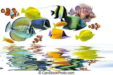 groep, van, vissen