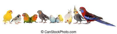 groep, van, vogels