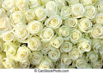 groep, van, witte , rozen, trouwfeest, decoraties