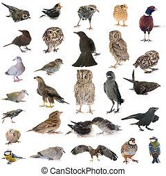 groep, wild, vogels