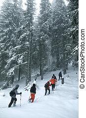 groep, winter, sneeuw, spoor, trekkers, bos