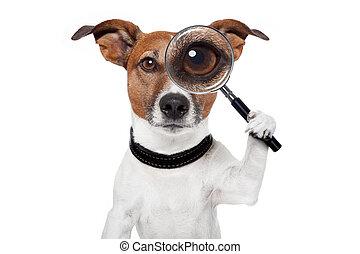 grondig, dog, met, vergrootglas