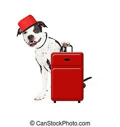 groom, chien, valise
