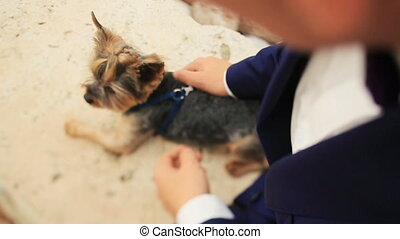 Groom petting little cute dog terrier  lying on the sand in Montenegro, Budva close up