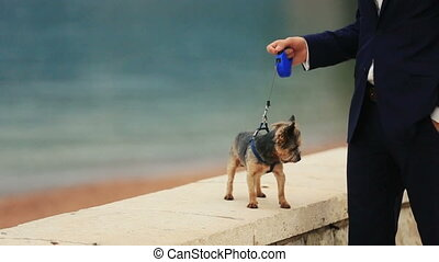 Groom walking the cute yorkshire terrier on sunny quay in Montenegro, Budva close up
