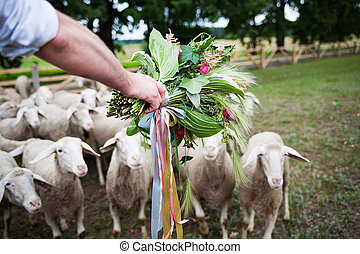groom with a bouquet on background of sheep