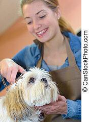 groomer, prendre, chien, soin