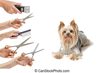 Grooming pets concept isolated