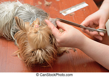 grooming - professional care for dog hair
