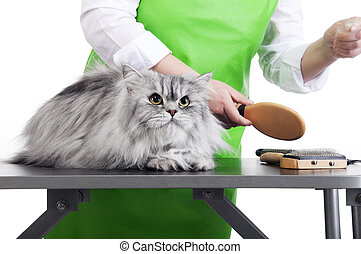 Grooming - Master of grooming combs gray Persian cat on the...