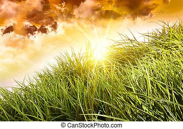 groot, blazen, gras, wind
