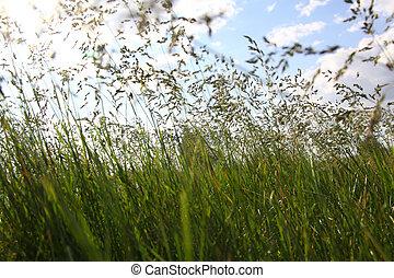 groot, gras, groene