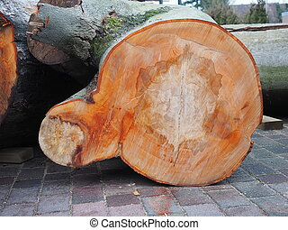 groot, hout, eik