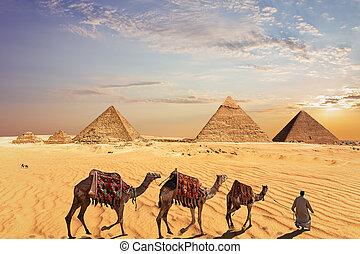 groot, kameel, egypte, caravan, giza piramides
