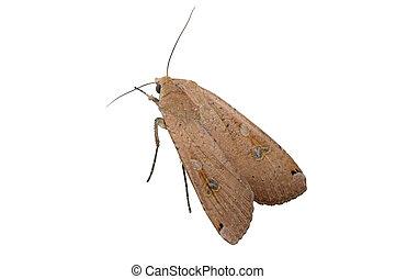 groot, moth