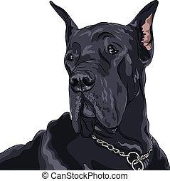 groot, ras, huiselijk, schets, dog, vector, black , deen