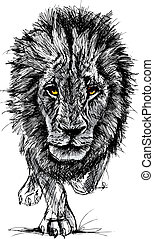 groot, schets, mannelijke leeuw, afrikaan