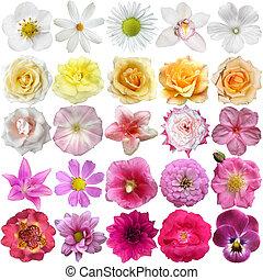 groot, selectie, van, gevarieerd, bloemen, vrijstaand, op wit, achtergrond