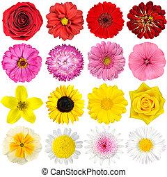 groot, selectie, van, gevarieerd, bloemen, vrijstaand, op wit
