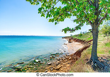 groot, strand, boompje, groene