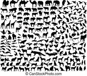 groot, verzameling, van, anders, dier