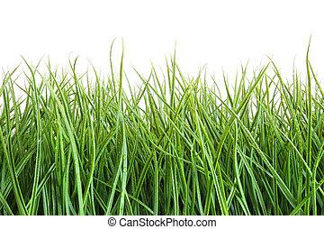 groot, witte , gras, tegen, nat