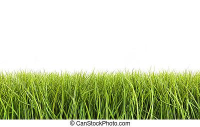 groot, witte , gras, tegen