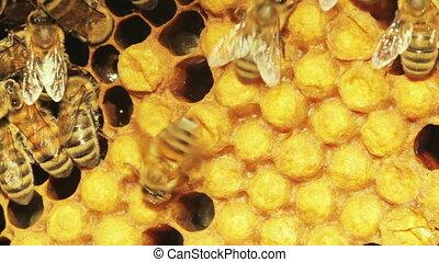 gros plan, abeilles, honeycombs., vue