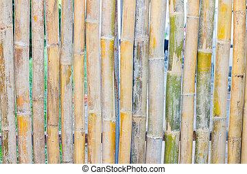gros plan, bambou, barrière