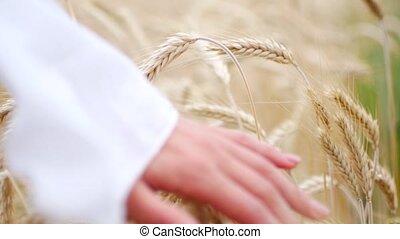 gros plan, blé, main femme, courant, par, chariot, champ, coup