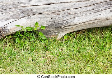 gros plan, bois mort, arrière-plan vert, bûche, herbe