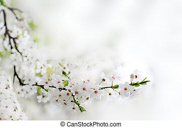 gros plan, branche, arbre, sur, fleurs, ensoleillé, fond, bokeh, gris, printemps, blanc