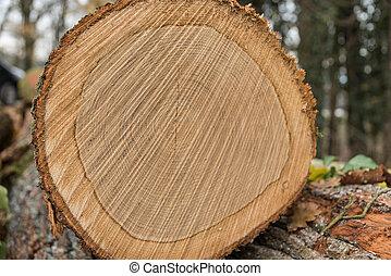 gros plan, coupure, -, arbre, surface, forêt