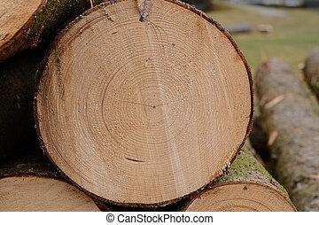 gros plan, coupure, tronc arbre