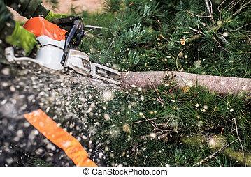 gros plan, découpage, midsection., tronçonneuse, bûcheron, arbre