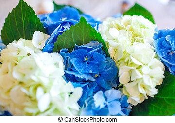 bleu gros plan bouquet hortensia fleurs vue photo de stock rechercher images et clipart. Black Bedroom Furniture Sets. Home Design Ideas